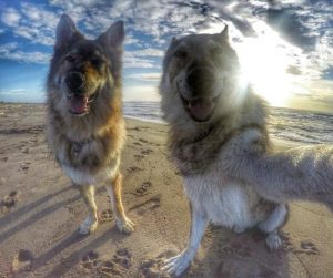 Top 10 UK Dog Beaches
